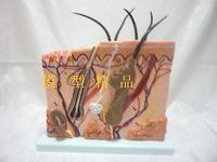 Medical collage For Doctor Training manikin model human model