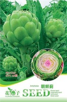 5 Pack 20 Seed Artichoke Seeds Cynara Scolymus Organic Vegetable Hot C057