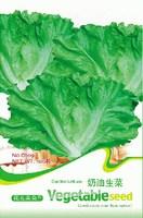 Free Shipping 3 Packs 300 of Garden Lettuce Seeds,Cream lettuce seed C009