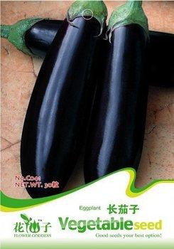 Free Shipping 5 Packs 150 of Purple Eggplant Seeds,eggplant, aubergine, brinjal seed C041