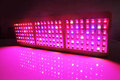 New Arrival 2013 Led Grow Light  450W Growth/Bloom Switches