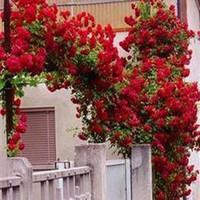 DIY Home Garden 100 pcs of Climbing red rose seeds free shipping