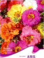 Free Shipping 3 Packs 600 of Sun Plant Flower Seeds,Portulaca Grandiflora seed A022
