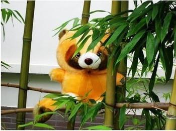 Free Shipping Cartoon plush toy bear teddy bear little raccoon birthday gift