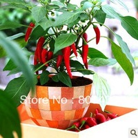 DIY Home Garden 5 packs Red Hot Chili Peppers seeds free shipping can mix other pack together