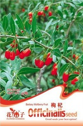 5 Pack 15 Seed Barbary Wolfberry Ftuit Seeds Health Benefits medlar Goji Berry Lycii Seed E006(China (Mainland))