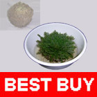 RESURRECTION PLANT Rose of Jericho Dinosaur Air Fern Spike Moss Tumbleweed Live