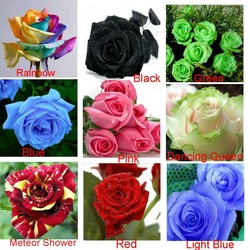 9 COLORS 1800 SEEDS ROSE SEEDS (200 SEEDS EACH COLOR) WITH FULLY SEALED ALUMINUM FOIL BAG WITH SOWING INSTRUCTION ONLY $5.99(China (Mainland))