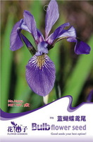 5 Pack 25 Seed Beautiful Lovely Blue Iris Flower Seeds Iris Tectorum Hot H002
