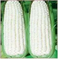 Free shipping 10 pcs corn seed,Sweet glutinous fruit corn