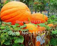 Huge Pumpkin Seeds Cucurbita 25kg-50kg per pcs Vegetable Seed 10pcs/bag  Free Shipping