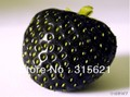 100 SEEDS HERMETIC PACKAGE BLACK STRAWBERRY SEEDS ONLY $5.99 PLUS GIFT AND FREE SHIPPING * FRESH FRUIT SEEDS * NON-GMO VEGETABLE