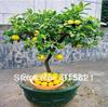 Bonsai Lemon Tree Seeds High survival Rate Fruit Tree Seeds For Home Gatden Backyard (20Pieces)  Free Shipping