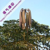 5pcs/bag Oroxylum Seeds DIY Home Garden