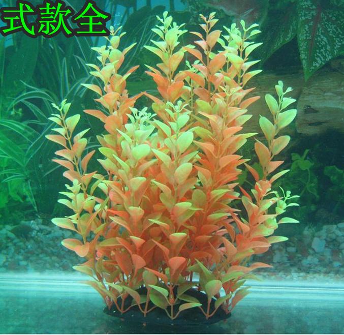 Magasins d 39 article promotionnels plantes tropicales vertes for Plantes vertes hautes