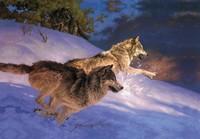 """30*40cm PET 3D High Definition Decorative Picture of """" Ferocious Wolves """", Accept Mix Order"""