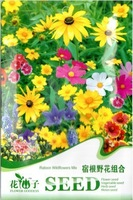 Free Shipping 3 Packs 600 of Ratoon Wildflowers Mix colorful Seeds Flower Seed K001