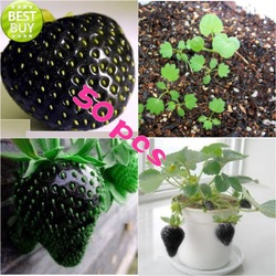 Free shipping 50pcs/lot hot selling black strawberry seeds for DIY home garden(China (Mainland))