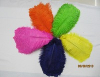 "wholesale 700pcs/lot 14-16"" Ostrich Feather Plume FREE SHIPPING"