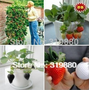Free Shipping Potted strawberry strawberry seeds of potted strawberry can be the four seasons for low sugar acid / taste great(China (Mainland))