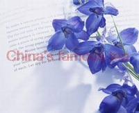 Flower seeds quality goods violet seed grass osmanthus flowers potted balcony