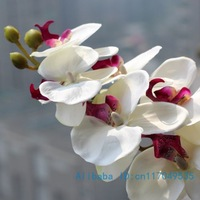 1 Stem Beautiful Silk Flower Artificial Moth Orchid Butterfly Orchid Home Decoration 2 types 12 Colors Available F152