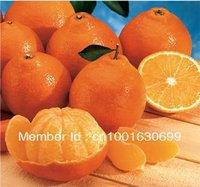 SD0511 Orange Tangerine Seeds,Great Tasting, Organic , New seeds For Season, 90%+gemination, 40 Seeds, free shipping