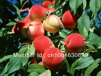 SD0531 Sweet Peach Seeds, Autumn Red Peach Tree Fruit Seeds, 15 seeds, free shipping