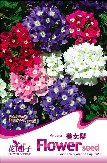 5 Pack 150 Seeds Mix Color Verbena Flower Seed Free Shipping A066(China (Mainland))