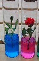 Test tube rose valentine day gift mini rose