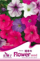 5 Pack 500 Seed Petunia Seeds  Morning Glory Petumia Hybrida A062
