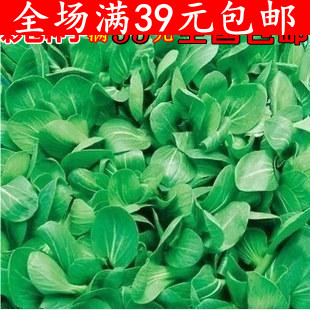 Free shipping Vegetable seeds chicken dish seeds webcasts 20 200 four seasons Promotion Offer(China (Mainland))