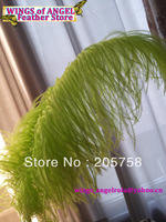 "wholesale 100pcs/lot 14-16"" Lime Green Ostrich Feather Plume FREE SHIPPING"
