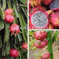 Free Shipping 100 pcs / Pack  Pitaya Seeds *** dragon fruit seeds ***high quality fruit seeds