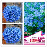 Plant bonsai flower blue flower linen seed flower seeds