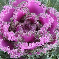 new Flower plants flower fruits and vegetables flower seeds collarbones seeds balcony bonsai