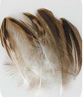 100PCS/LOT 5-10cm Mallard Duck Feather Barred Plumage Natural Colour FREE SHIPPING