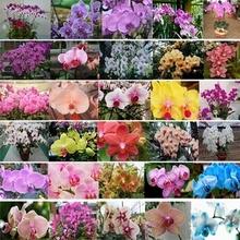 24 tipos Sementes Borboleta Flor da orquídea (mix) (240 sementes) em um preço por atacado frete grátis(China (Mainland))