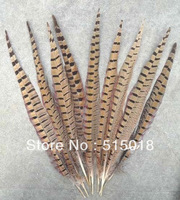 Wholesale Free Shipping 100pcs 25-30cm natural pheasant feather tail Ringneck pheasant feather tail
