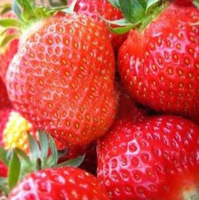 free shipping 405pcs seed big red Pineberry Strawberry Seeds fruit DIY Garden,rich health beautiful inory red strawbettry 018