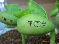 Magic lettering magic bean flowers and seeds birthday gift schoolgirl girl gift 15g