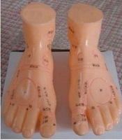 Model foot 20cm foot massage model a pair of acupuncture points