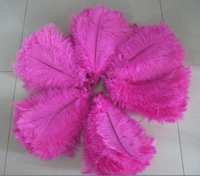 "Wholesale prices,12-""14"" inches length,100pcs/lot,ostrich feathers for wedding decor!"