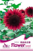 Sunflower Seed 1 Pack 15 Seeds Red Fortune Flower Seed