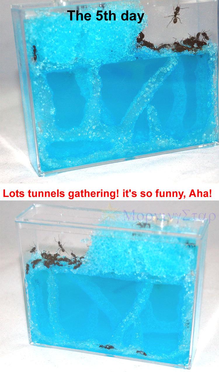 5pcs / lot As Formigas 'Home Oficina Ecológica brinquedos Assista as formigas escavam túneis para crianças caçoa meninas dos meninos(China (Mainland))