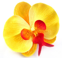 10 Big Phalaenopsis Heads Artificial Flower - Silk Flowers 3.75 inches  yellow