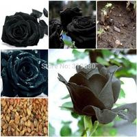 Free Shipping 200 Seeds China Rare Black Rose Flower black rose seed