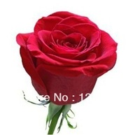 Wholesale 800 New Beautiful Love Red Rose Seeds,  Garden Plants Flower Seeds, High Quality, Free Shipping