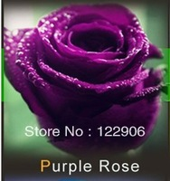 Free Shipping Wholesale 500 New Beautiful Love Sexy Purple Rose Seeds,  Garden Plants Flower Seeds, High Quality,