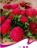 Free Shipping 3 Packs Of Daisy Seeds/1 Pack 50 Seeds Bellis Perennis Marguerite Garden Flower A118